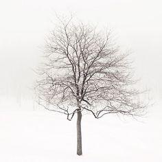 Winter Solstice-Irene Suchocki
