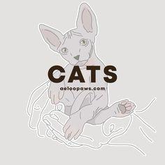 Unique pet portraits for you and your furry friend Cat Illustrations, Cat Posters, Cat Photography, Unique Animals, Cat Drawing, Custom Posters, Custom Art, Pet Portraits, Cat Art