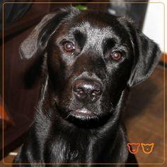 Eu sou a Kyara // ► http://veterinario24horas.pt/animais-de-estimacao/kyara-98 // Registe-se também no nosso site e partilhe connosco as fotos do seu animal de estimação!