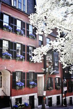 Pinckney Street in the Spring, Beacon Hill, Boston