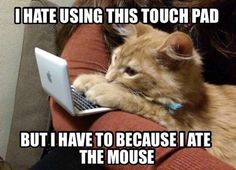 Funny pictures about Cyber Cat Problems. Oh, and cool pics about Cyber Cat Problems. Also, Cyber Cat Problems photos. Funny Animal Memes, Cute Funny Animals, Cute Baby Animals, Funny Cute, Cute Cats, Funny Jokes, Funniest Animals, Cat Fun, Adorable Kittens