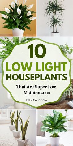 10 Low light houseplants that are low maintenance and hard to kill. These low li… 10 Low light houseplants that are low maintenance and hard to kill. These low light indoor plants include air purifying plants and are perfect for beginners! Easy House Plants, House Plants Decor, Indoor House Plants, Indoor Garden, Indoor Plants Low Light, Best Indoor Plants, Inside Plants, Low Maintenance Garden, Diy Décoration