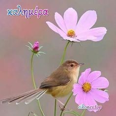 Good Morning Greetings, Good Morning Quotes, Greek Language, France, Greek Quotes, Good Night, Beautiful Pictures, In This Moment, Bird