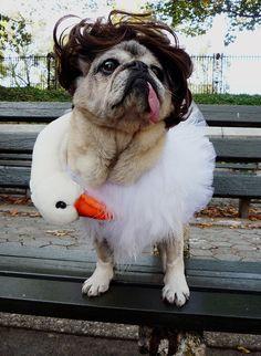 Pug con vestido de cisne de Bjork en 2001 | 26 Disfraces que prueban que los Pugs siempre ganan en Halloween