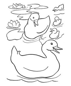 Free printable duck coloring pages for kids, coloring duck, ducks coloring pages suitable for toddlers, preschool and kindergarten