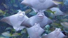 Cute Baby Stingrays