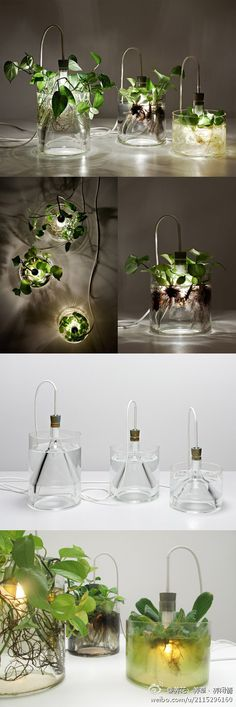 Transparent water bottles in addition to the dependent plants, but also furniture decoration, brings a natural ~ ~