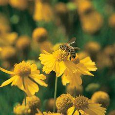 Make your garden bee-friendly in summer