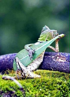 What? This isn't a guitar?!