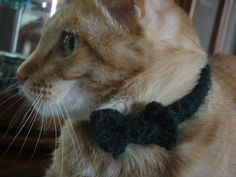 Crochet Kitty Bowtie Collar · How To Make A Pet Collar/Leash · Sewing and Crochet on Cut Out + Keep Cat Bow Tie, Bow Tie Collar, Bow Ties, Crazy Cat Lady, Crazy Cats, Big Cats, Crochet Hats For Boys, Cat Allergies, Kitten Collars