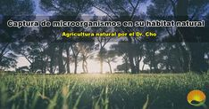 La Captura de microorganismos en la Agricultura Natural (AN) tiene un enfoque concreto para trabajar mejor la agricultura, a la vez que se observan y respetan las leyes de la naturaleza empleando sus técnicas que la misma naturaleza nos proporciona. Farming, Natural Farming, Microorganisms, Naturaleza