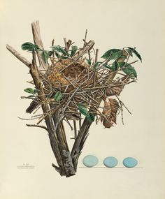 America's Other Audubon: A Victorian Woman's Radical Journey of Art, Science, and Entrepreneurship | Brain Pickings