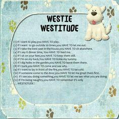 Westie More