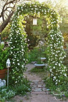 A trellis entwined with flowers is always beautiful. I am growing MoonFlowers now to do this with. MoonFlowers will actually 'Glow' at night.