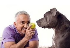 Cesar Millan and pit bull Junior.