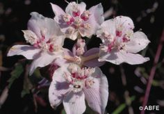 Australian Bush Flower Essence: Southern Cross. This Essence helps people understand that they create all the situations that happen to them in life and that they can change their situation by changing their thoughts.