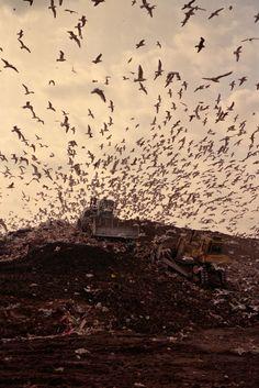 Fresh Kills landfill, Staten Island, New York, 1992. Photo: Diane Cook and Len Jenshel