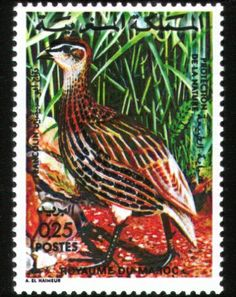 Moroccan Post Stamp