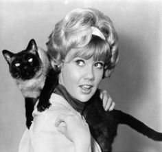 In the movie, That Darn Cat (1965), Haley Mills and Dean Jones had their hands full with a siamese.