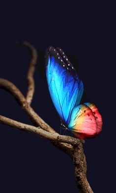 Find images and videos about gif on We Heart It - the app to get lost in what you love. Beautiful Nature Wallpaper, Beautiful Gif, Love Wallpaper, Galaxy Wallpaper, Wallpaper Backgrounds, Blue Butterfly Wallpaper, Butterfly Gif, Butterfly Pictures, Murciano Art