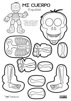 Actividades para trabajar los HUESOS (El esqueleto).