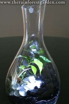 DIY gift idea! Make a glowing terrarium with LED lights.
