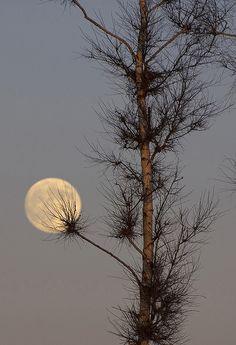 Winter dandelion, Russia in Moonlight Stars Night, Good Night Moon, Moon Shadow, Moon Photos, Moon Pictures, Shoot The Moon, Sun Moon Stars, Moon Magic, Beautiful Moon