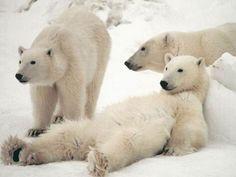 クマがリラックスしているのがかわいいwwwwwこれぞまさにリラックマwwwwwwwww:ハムスター速報