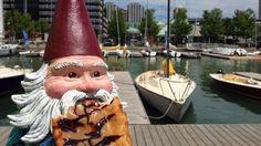 ... The infamous Maple Chocolate Beaver Tail. @BTMobileGTA #Gnome Wisdom