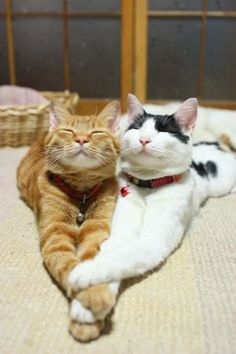 It's cat love!   ...........click here to find out more     http://googydog.com
