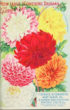 The Dingee & Conard Co -  Our new guide to rose culture : typical D&C roses painted from nature 1903