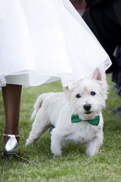 Need to find a bow tie for Max -- of course our little ring bear should be dressed to match the bridal party!