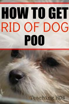 How to get rid of dog poo...   Because for how to tips - Click on the following link!  http://www.teachinghow.com/how-to-get-rid-of-dog-poo/