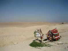 camel having a breaktime, in egypt Travel Photos, Egypt, Camel, Animals, Animaux, Travel Pictures, Camels, Animal, Animales