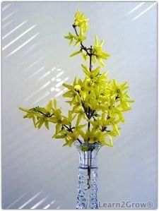 Forsythia vázában