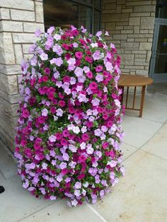 How to Make a Petunia Tower --  Basically, its a ring of galvanized fencing lined with landscape fabric, then filled with potting soil. The petunias were planted through slits in the landscape fabric. This looks like a pretty easy do-it-yourself project!