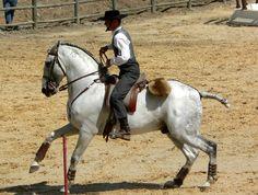 cavalo lusitano - Pesquisa do Google