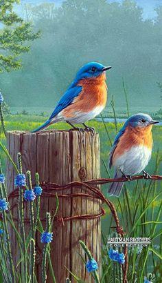 thursday - on the house - Diamond Painting- Full Drill Standing Birds Scenery Pictures, Bird Pictures, Pictures To Paint, Mosaic Pictures, Exotic Birds, Colorful Birds, Pretty Birds, Beautiful Birds, Graffiti Kunst