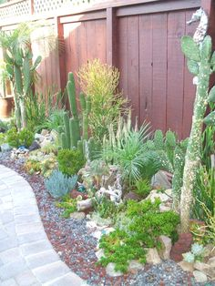 Under the Sea succulent Garden! Tortoise Run, Beautiful Gardens, Beautiful Homes, Succulent Landscaping, Water Wise, Ocean Themes, Grow Your Own Food, Next At Home, Succulents Garden