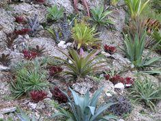 Bromeliad garden