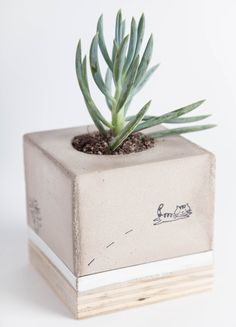 Concrete Planter with Cat Illustration