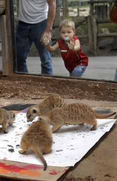 wild animal enrichment images | Art Gone Wild: Animal enrichment at the zoo : Knoxville Photo ...