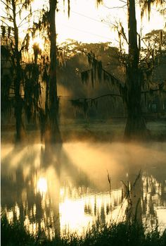 Florida  swamp. <3 Where i come from