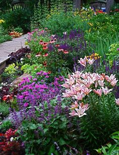lilies, salvia, echinacea and more in a perennial garden...