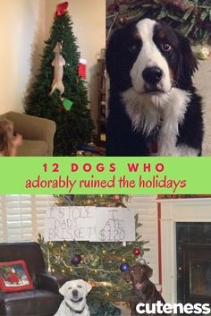 We love our dogs, but they also make us laugh (when we're done crying because they just might have ruined the holidays). Cute Dog Pictures, Pet Health, Dog Life, Cute Dogs, Dogs And Puppies, Funny Animals, Crying, Chill, Hilarious