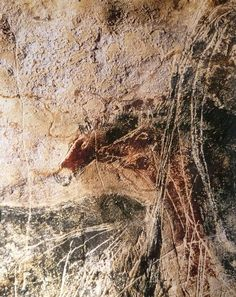 Lascaux - Têtes de chevaux