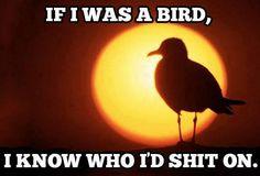 If I was a Bird.  #LOL