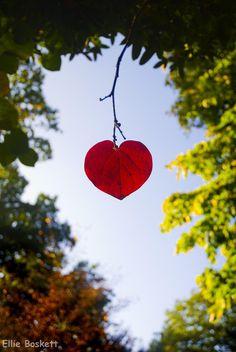 Leaf Heart by Ellieee93.deviantart.com on @deviantART