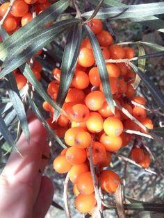 Bylinkové masti a mazání | Bylinky pro radost - Part 2 Exotic Flowers, Aloe Vera, Korn, Life Is Good, Carrots, The Balm, Tropical, Herbs, Fruit