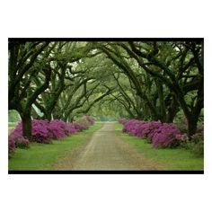 Plantation Driveway, Near Vicksburg, Mississippi ❤ liked on Polyvore